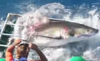 tiburón portada