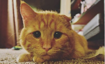 gato portada