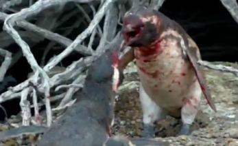 pinguino PORTDA
