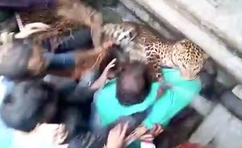 jaguar PORTADA