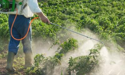 TLCAN, negociaciones de TLCAN, medidas fitosanitarias en TLCAN, sector privado agroalimentario, Negociaciones del Tratado de Libre Comercio de América del Norte, Tratado de Libre Comercio