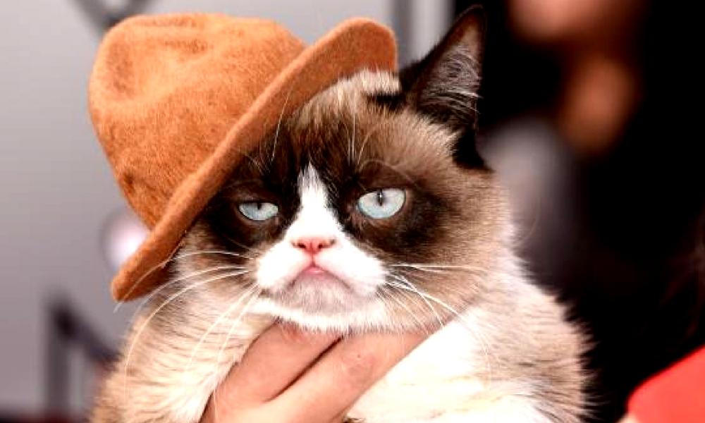 Grumpy Cat gana demanda millonaria