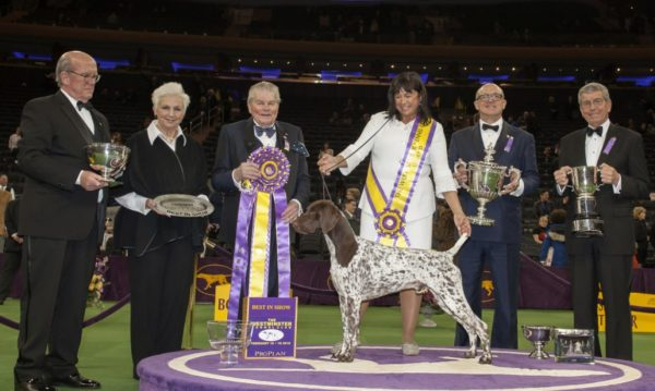 Galería Westminster Kennel Club Dog Show Best-in-Show-e1478461923422-1170x700-600x359