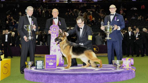 Galería Westminster Kennel Club Dog Show DN33397401-600x338