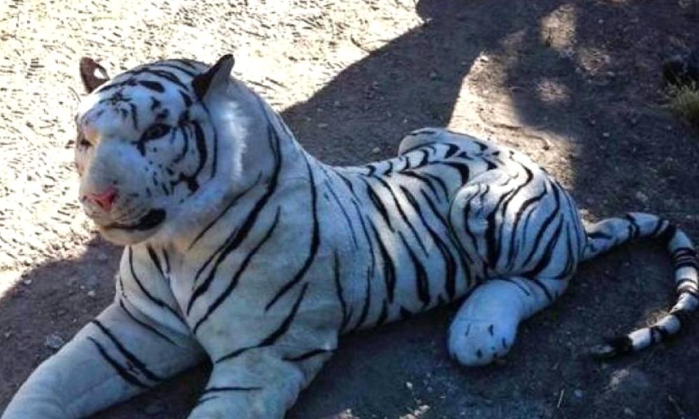 peligroso tigre de peluche
