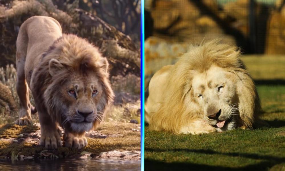 Zoológico tiene al 'elenco' de 'The Lion King'